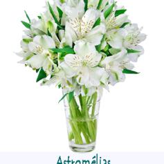 2015-01-06 - astromélias