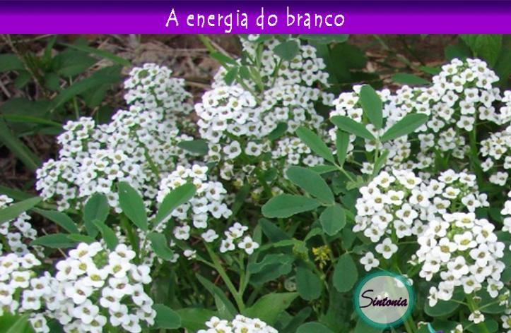 2015-01-06- energia do branco