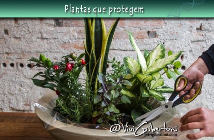 plantas-que-protegem